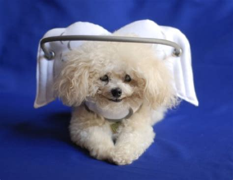 toys for blind dogs muffin s halo blind toys