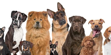 how many dogs can you how many of these dogs can you name