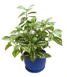 common house plants safe for cats 1000 images about pet safe house plants on