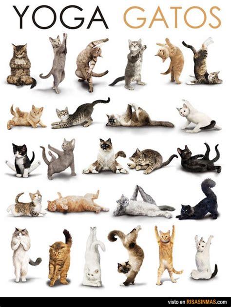 imagenes de yoga chistosas gatos haciendo yoga