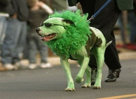 green puppy if you a lot of grass don t get a white pics