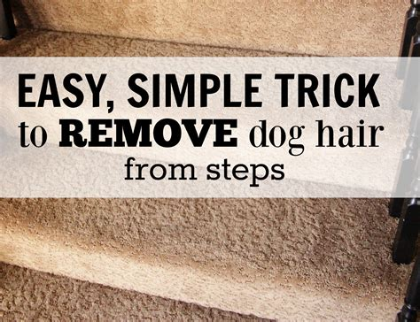 how to remove cat hair from couch how to easy dog hair removal from couch stairs and more