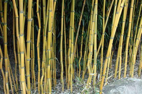 bambus garten bambus garten bambus garten design kunstrasen garten