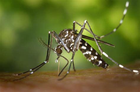 l du moustique tigre ressources et environnement