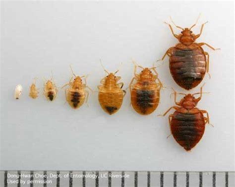 bed bug awareness week pests   urban