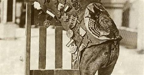 Sgt Stubby Bio Cool Pets 4u Sergeant Stubby Army Biography And Pictures
