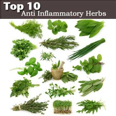 Garden Of For Your Inflammation Top 10 Anti Inflammatory Herbs Turmeric