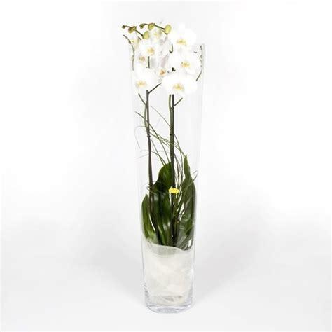 bosjes bloemen verzenden orchidee glas phalaenopsis in glasvaas thuisbloemist