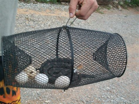 How To Catch A Snake In Your Backyard by Okies In The Byc Iii Page 2957
