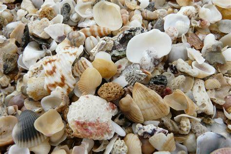 Mutiara Kerang Laut gambar alam daun bunga liburan makanan laut dekat