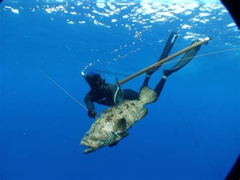 fishing with spear spearfishing bare island sydney new south wales australia