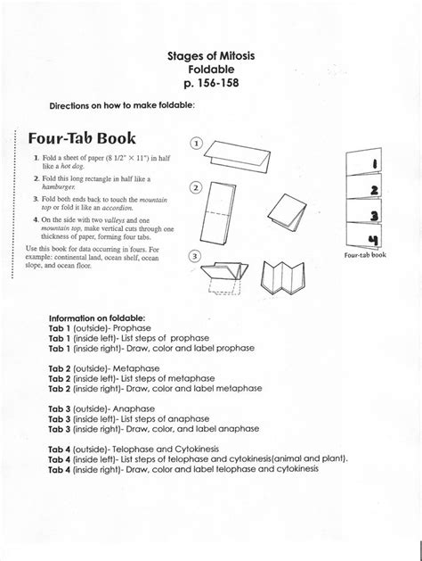 science vocabulary template vocabulary foldable template stages of mitosis foldable