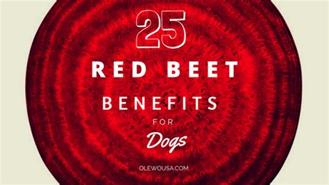 are beets for dogs 25 beet benefits for dogs olewousa