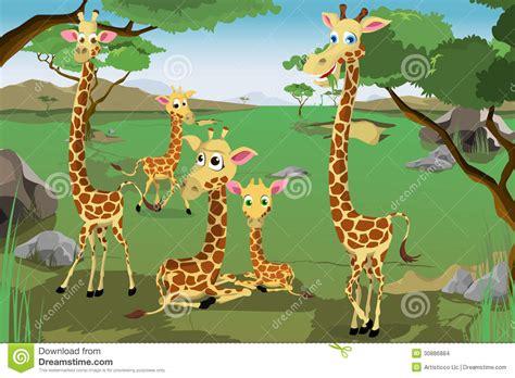 imagenes de jirafas en familia familia de jirafas imagenes de archivo imagen 30886884