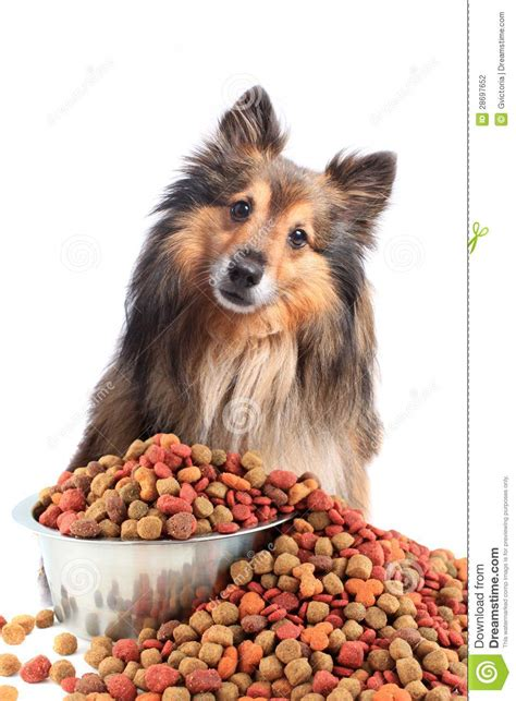 cute dog eating from bowl stock photo image 61440749 puzzled looking dog with food bowl stock photo image