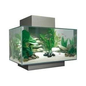 beautiful home fish tanks 17 best images about fish on pinterest bumble bees