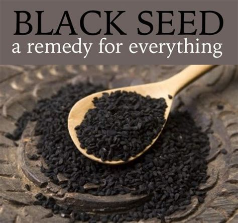 Black Cumin Seed And Liver Detox Pubmed by 1000 Ideas About Black Seed On Nigella