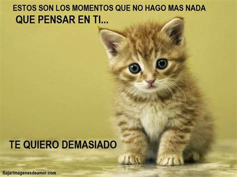 imagenes lindas de amor de gatitos mensajes de amor tiernas imagenes de amor con mensajes