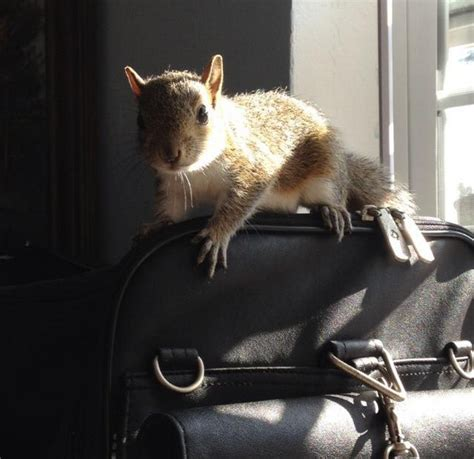 how to raise a squirrel saboteur365