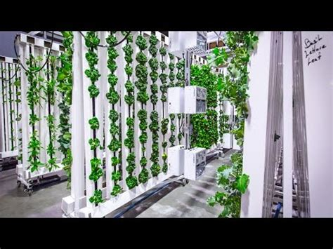 bright agrotech zipfarm youtube