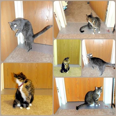 Stop Cat From On Rug by Keep Cats From Scratching Carpet Carpet Ideas