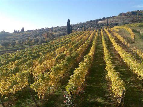 valpolicella benaco valpolicella le nuove ricerche su vitigni e territorio