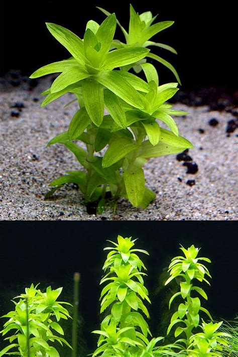 Aquascape Plants List by 27 Best Aquascape Images On Aquascaping