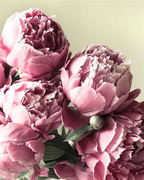 pink peonies nursery 25 best ideas about pink peonies on pinterest peonies