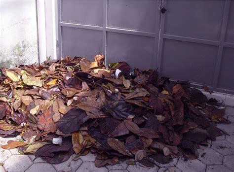 Fermentasi Pakan Ternak Dengan Tetes Tebu limbah daun kering jadi pakan fermentasi jurnal asia