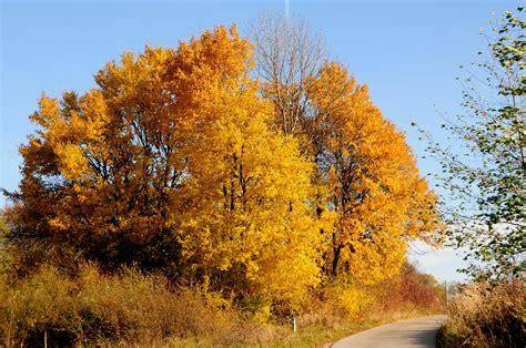fall trees trees photo 23948029 fanpop