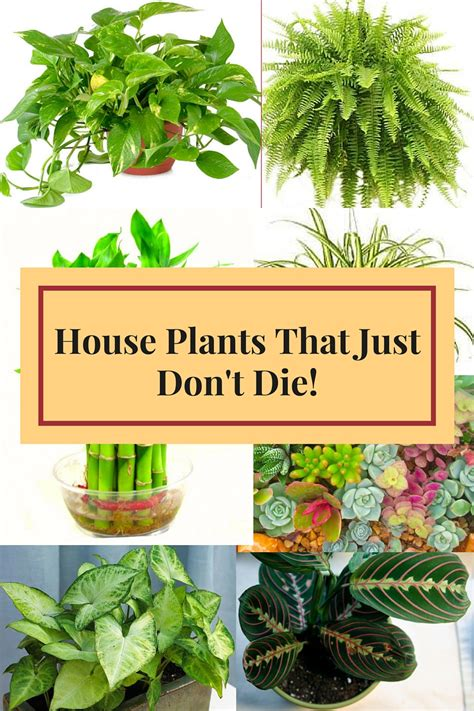 indoor trees that don t need plants that dont need light plants that dont need light 28