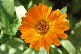 linguaggio fiori amicizia linguaggio dei fiori invia messaggi espliciti senza parole