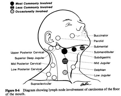 neck glands diagram cancers of the floor of the