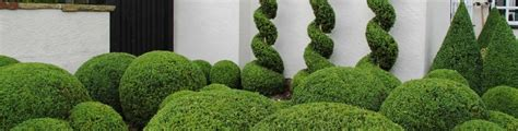 topiary styles caring for topiary crown topiary