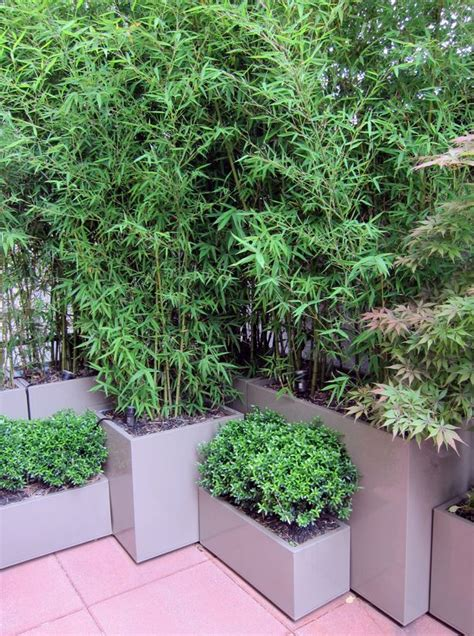Bamboo Planters by Best 25 Bamboo Planter Ideas Only On Bamboo