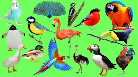 learn names birds for kids sounds and names animals