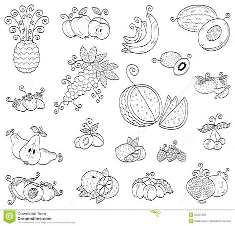 doodle fruit doodle fruits berries royalty free stock photo image