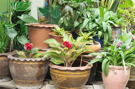 low maintenance potted plants what are my options home