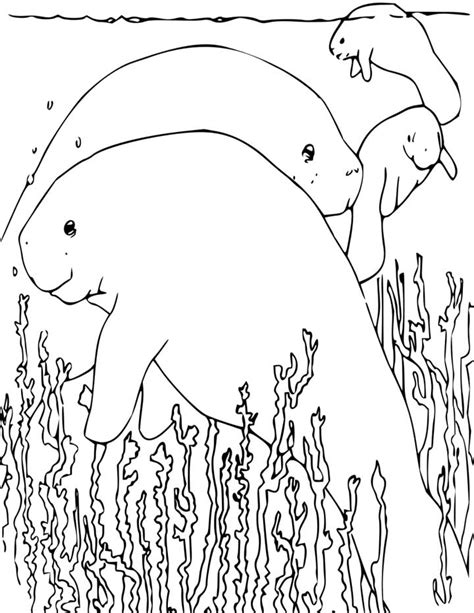 manatee coloring page  kids  printable picture