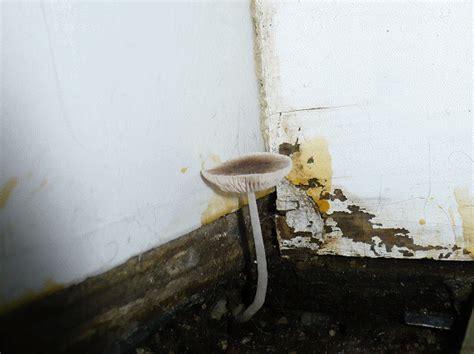 bathroom mushroom bathroom mushroom by professordoom on deviantart