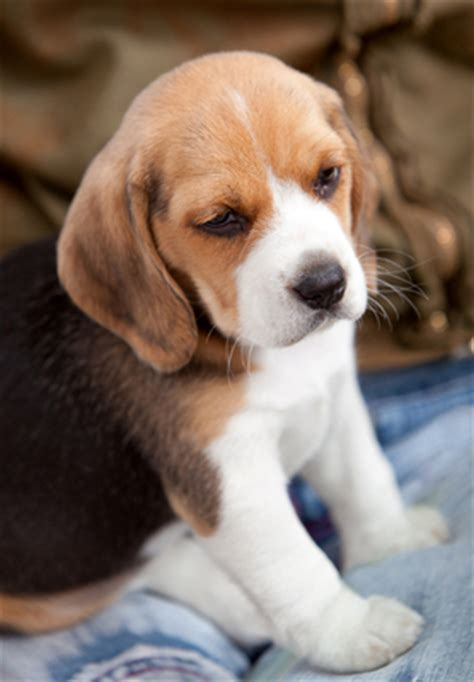 ear mites vs yeast infection ear mites vs ear infections animal care hospital of reynoldsburg