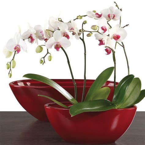 Pot Keramik Anggrek buy scheurich orchid plant pot zen