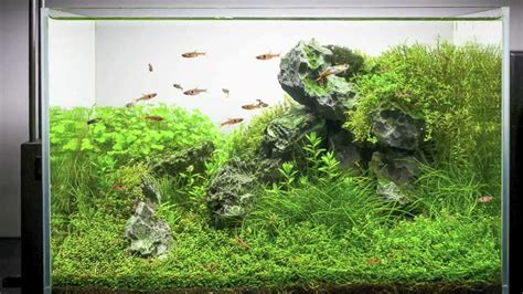 setting up a planted aquarium