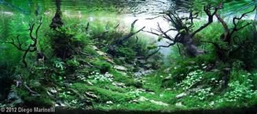 2012 aga aquascaping contest 190