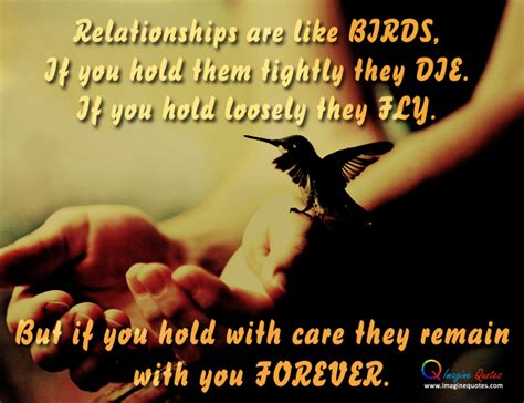quotes about love and birds quotesgram bird quotes about life quotesgram