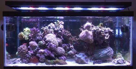 marine aquarium led lights get sophisticated with aquarium lighting the fish
