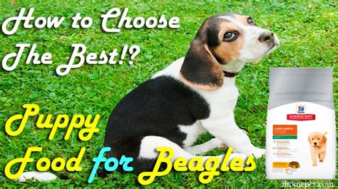 best food for beagles top 5 best puppy food for beagles how to choose the best ihome pets