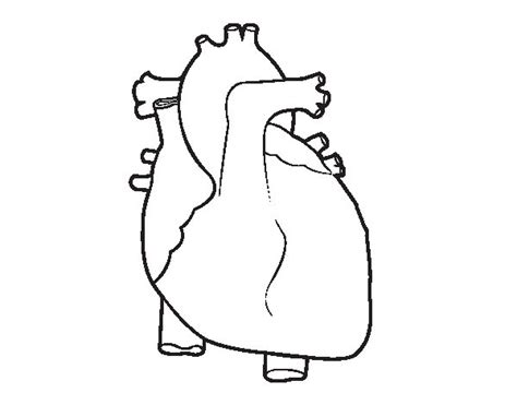 coloring page of a human heart human heart coloring page coloringcrew com
