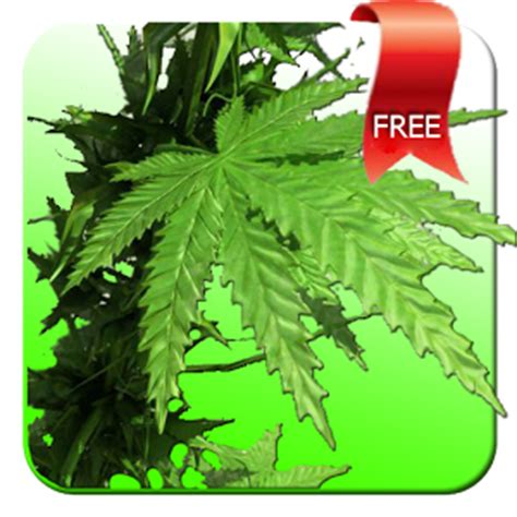 wallpaper for android weed weed 3d live wallpaper android informer a 3d weed lpw