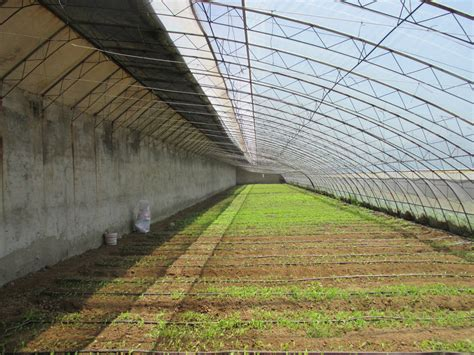 green house chinese chinese style solar greenhouses purdue university vegetable crops hotline